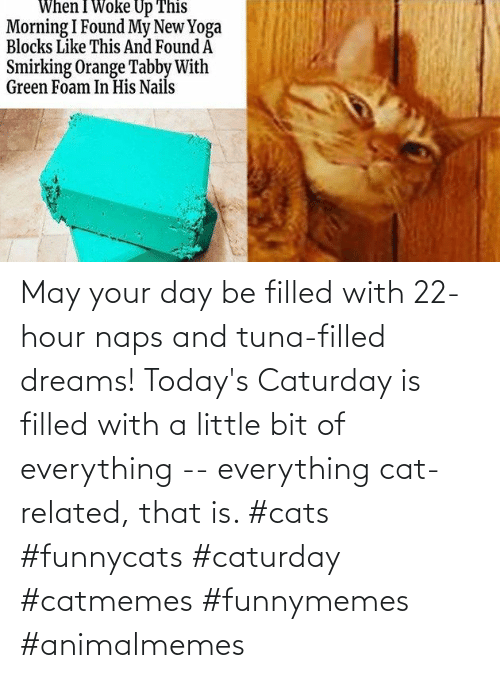 Todays: May your day be filled with 22-hour naps and tuna-filled dreams! Today's Caturday is filled with a little bit of everything -- everything cat-related, that is. #cats #funnycats #caturday #catmemes #funnymemes #animalmemes