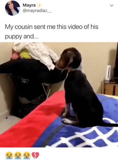 Memes, Puppy, and Video: Mayra  @mayradiaz  My cousin sent me this video of his  puppy and 😭😭😭💔