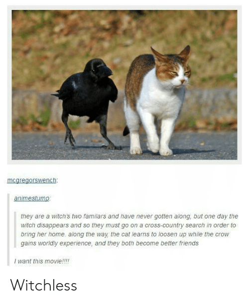 Loosen: mcaregorswench:  animestump  they are a witch's two familars and have never gotten along, but one day the  witch disappears and so they must go on a cross-country search in order to  bring her home. along the way the cat learns to loosen up while the crow  gains worldly experience, and they both become better friends  I want this movie!!!! Witchless