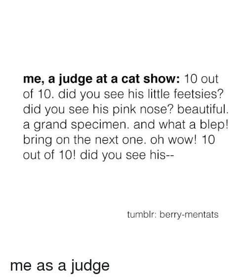 Cats, Memes, and Pink: me, a judge at a cat show  10 out  of 10. did you see his little feetsies?  did you see his pink nose? beautiful.  a grand specimen. and what a blep!  bring on the next one. oh wow! 10  out of 10! did you see his--  tumblr: berry-mentats me as a judge