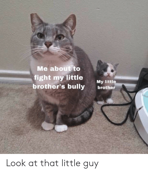 Little Brothers: Me about to  fight my little  My little  brother's bullybrother Look at that little guy