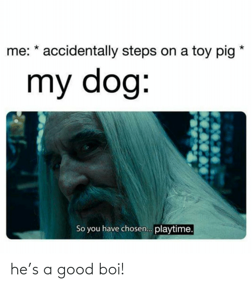 boi: me: * accidentally steps on a toy pig  my dog:  So you have chosen. playtime. he's a good boi!