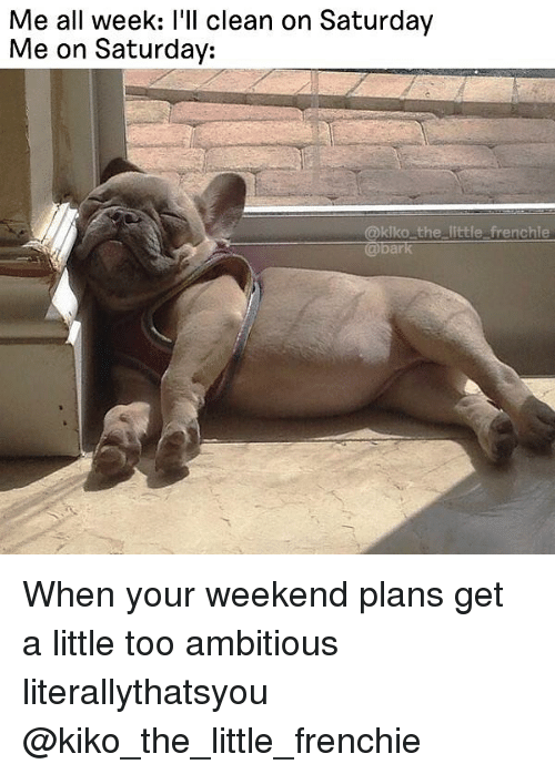 Weekend Plans: Me all week: l'll clean on Saturday  Me on Saturday:  @klko the little frenchle When your weekend plans get a little too ambitious literallythatsyou @kiko_the_little_frenchie