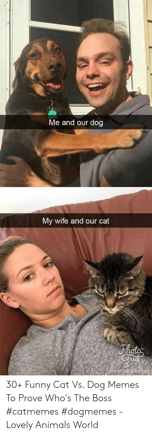Animals, Funny, and Memes: Me and our dog  My wife and our cat 30+ Funny Cat Vs. Dog Memes To Prove Who's The Boss #catmemes #dogmemes - Lovely Animals World
