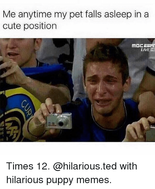 Cute, Memes, and Ted: Me anytime my pet falls asleep in a  cute position  LIVE H Times 12. @hilarious.ted with hilarious puppy memes.