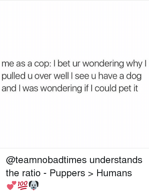 The Ratio: me as a cop: l bet ur wondering why  pulled u over well l see u have a dog  and I was wondering if Icould pet it @teamnobadtimes understands the ratio - Puppers > Humans 💕💯🐶