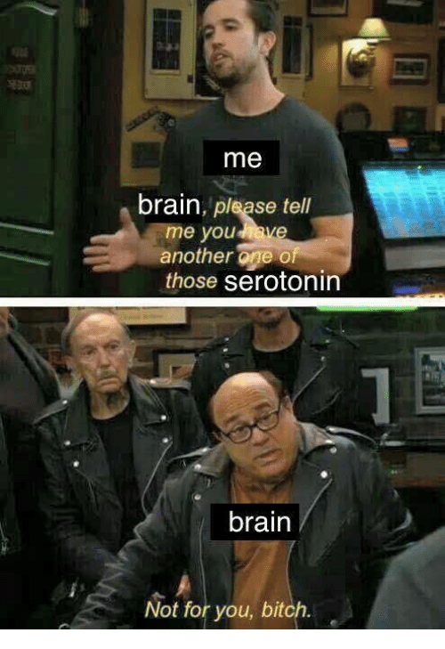 Another One, Bitch, and Brain: me  brain, please tell  me youave  another one of  those serotonin  brain  Not for you, bitch