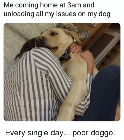 Memes, Home, and Coming Home: Me coming home at 3am and  unloading all my issues on my dog Every single day... poor doggo.