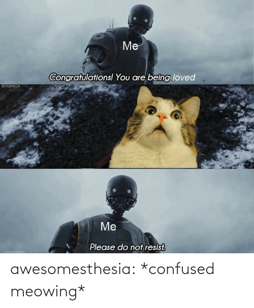 Confused, Tumblr, and Blog: Me  Congratulations! You are beîng loved  REYISBAEOK  Me  Please do not resist.  uapiocinokch awesomesthesia:  *confused meowing*