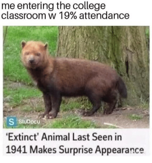 College, Animal, and Classroom: me entering the college  classroom w 1 9% attendance  StuDocu  Extinct' Animal Last Seen in  1941 Makes Surprise Appearance