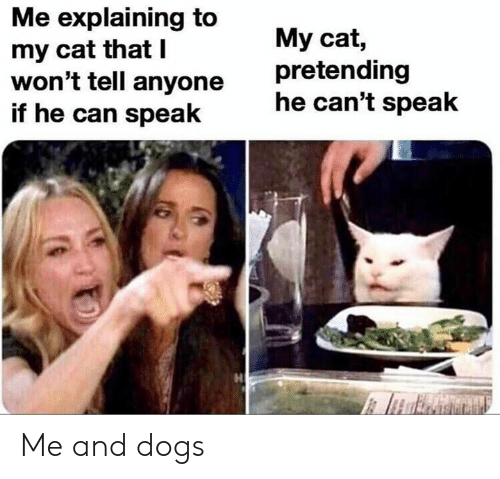 Dogs, Dank Memes, and Cat: Me explaining to  my cat that I  won't tell anyone  if he can speak  My cat,  pretending  he can't speak Me and dogs