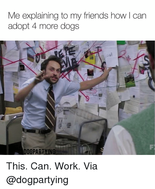 Dogs, Friends, and Memes: Me explaining to my friends how l can  adopt 4 more dogs  DOGPARTYING This. Can. Work. Via @dogpartying