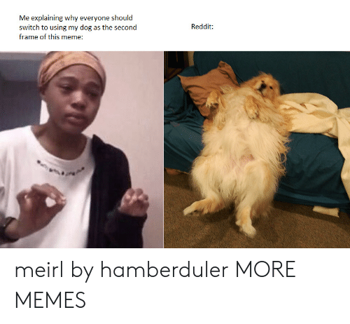 Dank, Meme, and Memes: Me explaining why everyone should  switch to using my dog as the second  Reddit:  frame of this meme: meirl by hamberduler MORE MEMES