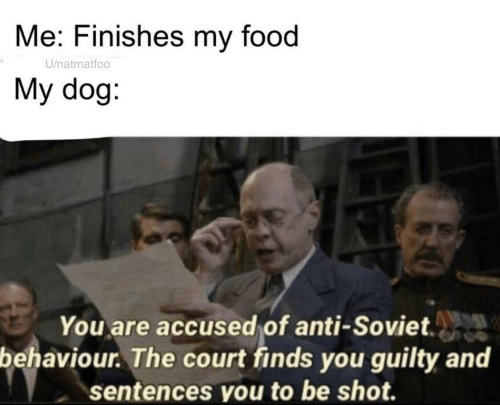 Food, Soviet, and Anti: Me: Finishes my food  U/natmatfoo  My dog:  You are accused of anti-Soviet.  behaviour. The court finds you guilty and  sentences you to be shot.