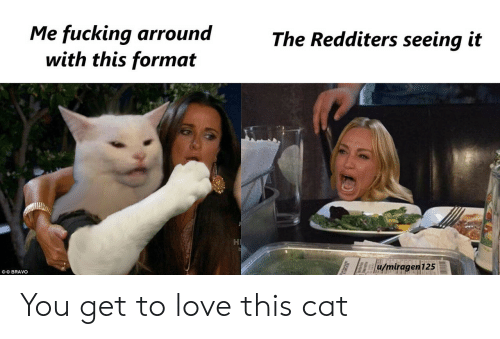 Fucking, Love, and Bravo: Me fucking arround  with this format  The Redditers seeing it  u/miragen125  OO BRAVO You get to love this cat