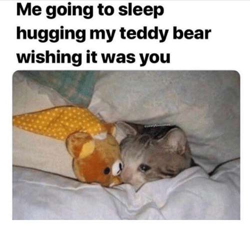 Bear, Sleep, and Teddy Bear: Me going to sleep  hugging my teddy bear  wishing it was you