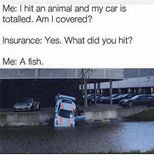 Dank, Animal, and Fish: Me: I hit an animal and my car is  totalled. Am I covered?  Insurance: Yes. What did you hit?  Me: A fish.