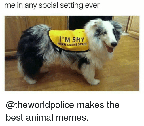 Memes, 🤖, and Shy: me in any social setting ever  the Worldpolice  I'M SHY  PLEASE G  MESPACE @theworldpolice makes the best animal memes.