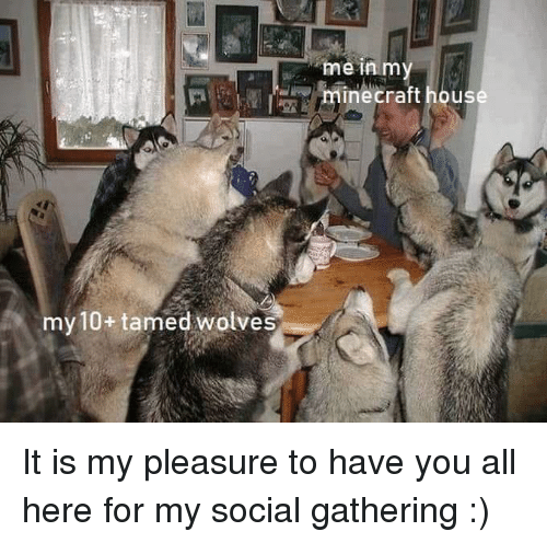 Minecraft, Wolves, and All: me in m  minecraft hous  my 10+ tamed wolves It is my pleasure to have you all here for my social gathering :)