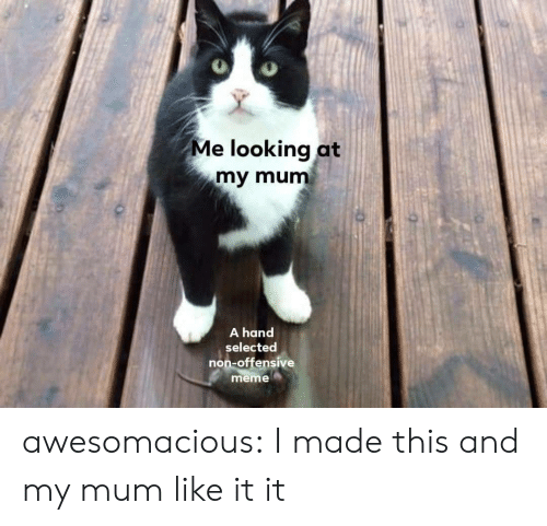 Meme, Tumblr, and Blog: Me looking at  my mum  A hand  selected  non-offensive  meme awesomacious:  I made this and my mum like it it
