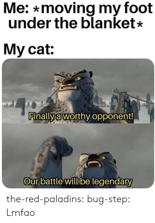 Gif, Tumblr, and Blog: Me: *moving my foot  under the blanket*  My cat:  Finally à worthy opponent  our battle willube legendary the-red-paladins: bug-step:    Lmfao