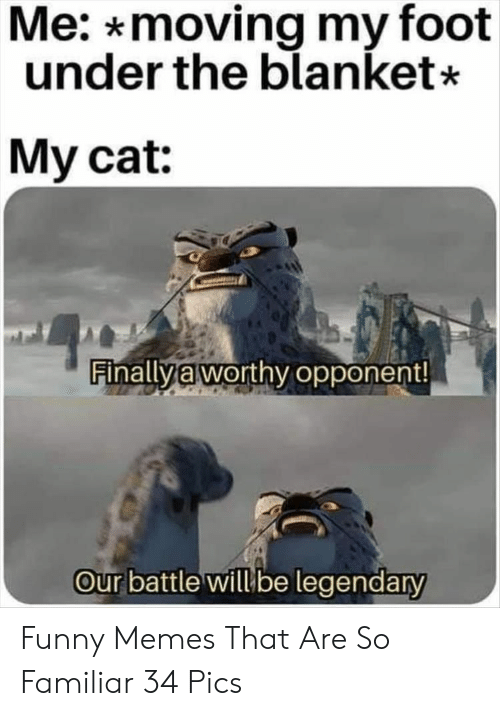 Funny, Memes, and Cat: Me: *moving my foot  under the blanket*  My cat:  Finallya worthy opponent!  Our battle willbe legendary Funny Memes That Are So Familiar 34 Pics
