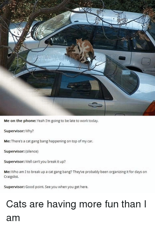 Going To Be Late: Me on the phone: Yeah I'm going to be late to work today  Supervisor:Why?  Me: There's a cat gang bang happening on top of my car.  Supervisor: (silence)  Supervisor: Well can't you break it up?  Me: Who am I to break up a cat gang bang? Theyve probably been organizing it for days on  Craigslist.  Supervisor: Good point. See you when you get here. Cats are having more fun than I am