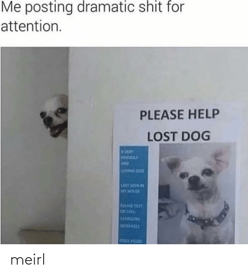 Dogs: Me posting dramatic shit for  attention.  PLEASE HELP  LOST DOG  AVERY  FRENDLY  AND  LOWNG DOG  LAST SEEN IN  MY HOUSE  PLEASE TEXT  OR CALL  123456765  M755-4321  DOGS KISSES meirl