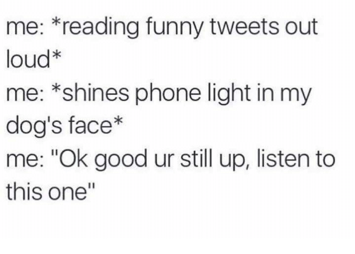 """Dog Faces: me: reading funny tweets out  loud  me: *shines phone light in my  dog's face  me: """"Ok good ur still up, listen to  this one"""""""
