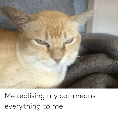 means: Me realising my cat means everything to me