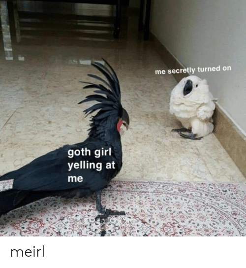 Girl, MeIRL, and Goth: me secretly turned on  goth girl  yelling at  me meirl