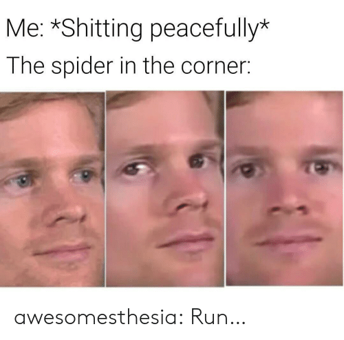 Run, Spider, and Tumblr: Me: *Shitting peacefully*  The spider in the corner: awesomesthesia:  Run…