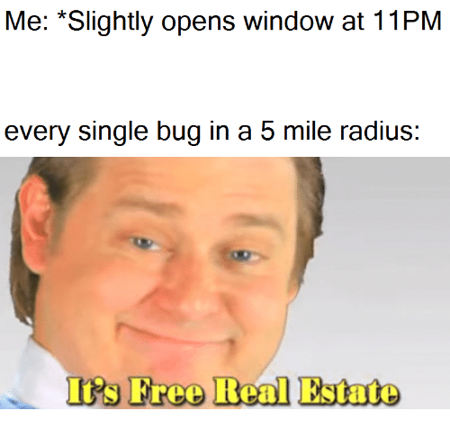 Real Estate, Single, and Radius: Me: *Slightly opens window at 11PM  every single bug in a 5 mile radius:  I's Freo Real Estate