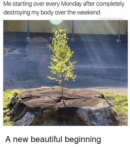 Beautiful, The Weekend, and Monday: Me starting over every Monday after completely  destroying my body over the weekend  @cabbagecatmemes A new beautiful beginning