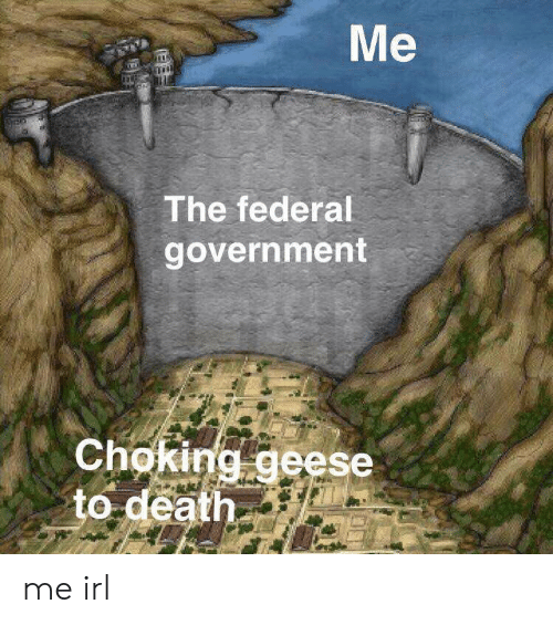 Death, Government, and Irl: Me  The federal  government  Choking geese  to death me irl