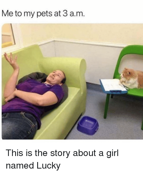 Pets, Girl, and Girl Memes: Me to my pets at 3 a.m This is the story about a girl named Lucky