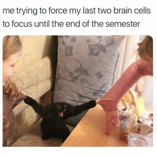 Brain, Focus, and Force: me trying to force my last two brain cells  to focus until the end of the semester
