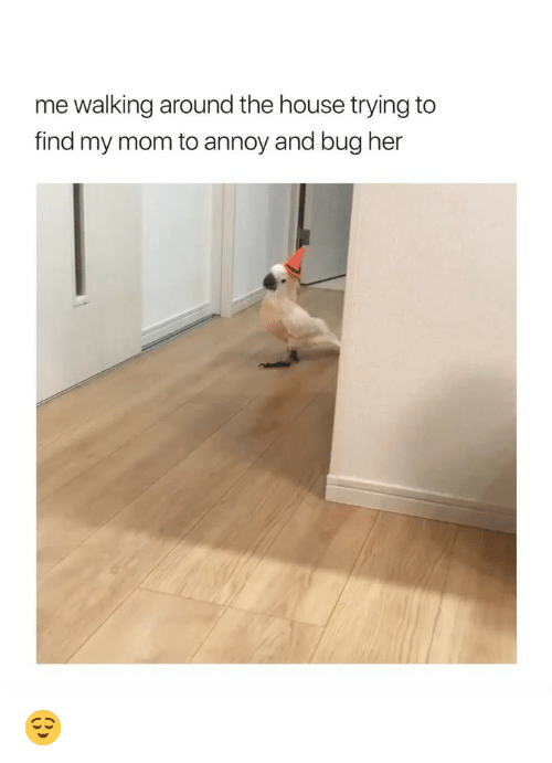 House, Girl Memes, and Mom: me walking around the house trying to  find my mom to annoy and bug her 😌