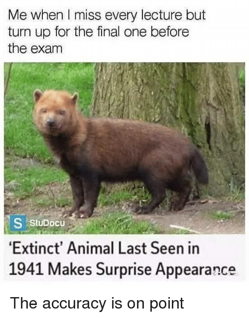 Memes, Turn Up, and Animal: Me when I miss every lecture but  turn up for the final one beforee  the exam  7  S StuDocu  Extinct' Animal Last Seen in  1941 Makes Surprise Appearance The accuracy is on point