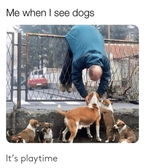 Dogs: Me when I see dogs It's playtime