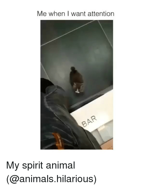 Animals, Funny, and Animal: Me when I want attention My spirit animal (@animals.hilarious)