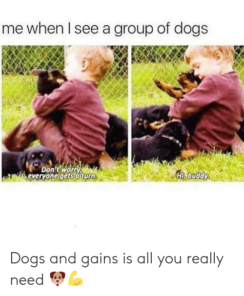 Dogs, Group, and All: me when Il see a group of dogs  Don't worn  everyone gets a turo  Hi buddy Dogs and gains is all you really need 🐶💪