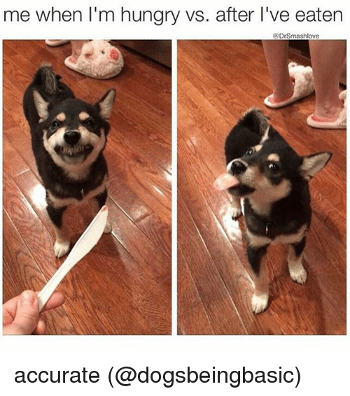 Hungryness: me when I'm hungry vs. after l've eaten  @Drsmashlove accurate (@dogsbeingbasic)