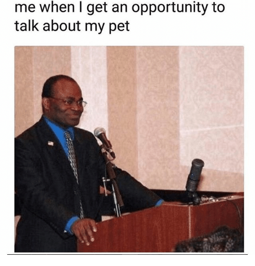 Memes, Opportunity, and 🤖: me when l get an opportunity to  talk about my pet