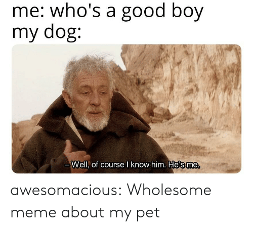 Meme, Tumblr, and Blog: me: who's a good boy  my dog:  те.  Well, of course l know him. He's me awesomacious:  Wholesome meme about my pet