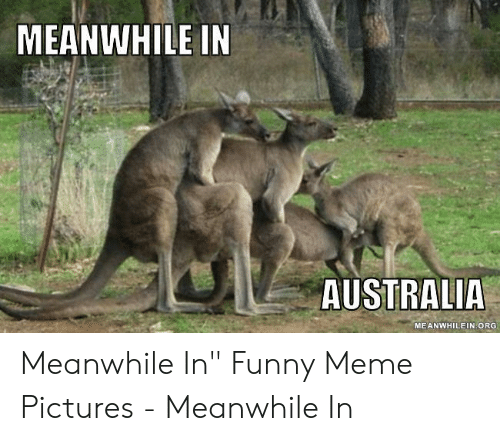 """Funny, Meme, and Australia: MEANWHILE IN  AUSTRALIA  MEANWHILEIN ORG Meanwhile In"""" Funny Meme Pictures - Meanwhile In"""