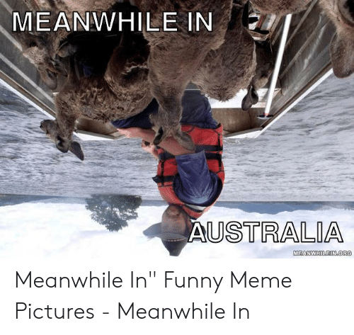 """Funny, Meme, and Pictures: MEANWHILE IN  USTRALIA  MEANWHILEIN OR Meanwhile In"""" Funny Meme Pictures - Meanwhile In"""
