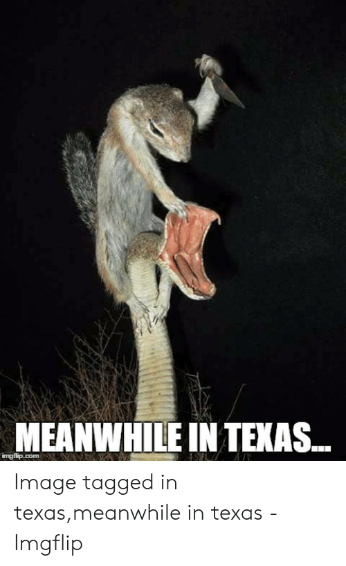 Texas Meme: MEANWHILE INTEXAS.  ingfip.com Image tagged in texas,meanwhile in texas - Imgflip