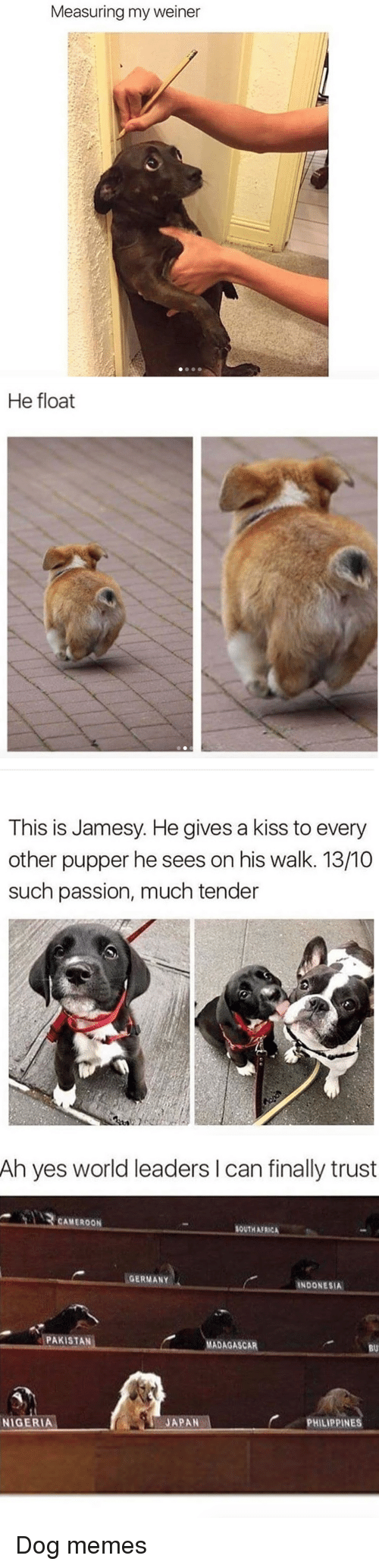 Africa, Memes, and Germany: Measuring my weiner   He float   This is Jamesy. He gives a kiss to every  other pupper he sees on his walk. 13/10  such passion, much tender   Ah yes world leaders I can finally trust  CAMEROON  SOUTH AFRICA  GERMANY  INDONESIA  PAKISTAN  MADAGASCAR  BU  PHILIPPINES  NIGERIA  JAPAN <p>Dog memes</p>