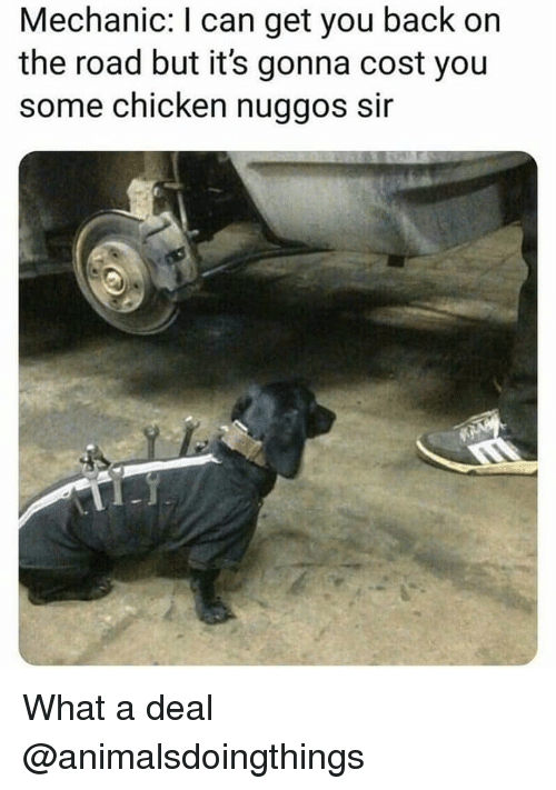 Chicken, Mechanic, and Dank Memes: Mechanic: I can get you back on  the road but it's gonna cost you  some chicken nuggos sir What a deal @animalsdoingthings